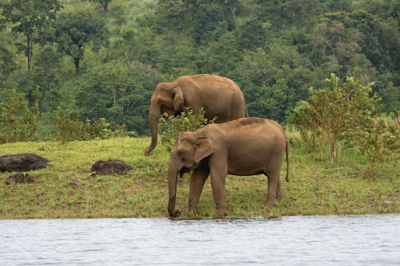 Elefantes en Parque Natural de Periyar