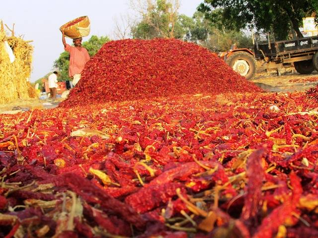 Chiles rojos secos